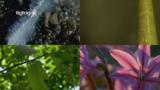 Aufbau der Pflanzen
