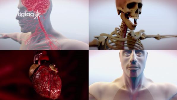 Organsysteme des Menschen