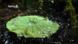 Was ist der Lotuseffekt?