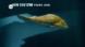 Wie haben sich Fische entwickelt?