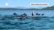Das Nahrungsnetz des Meeres – Vom Plankton bis zum Wal