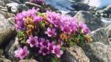 Pflanzen in extremen Lebensräumen