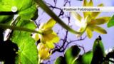 Pflanzenbewegungen – Tropismen