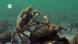 Exoskelett – Das Außenskelett der Gliederfüßer