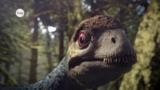 Wie haben sich Vögel entwickelt?