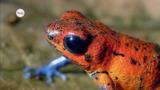 Was ist ein Amphibium?