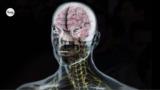 Das Nervensystem (Basiswissen)