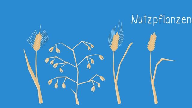 Gräser und Nutzpflanzen