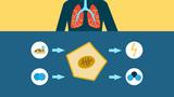 Gasaustausch – warum wir atmen