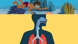 Der Weg der Atemluft
