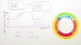 Zellzyklus (Vertiefungswissen)