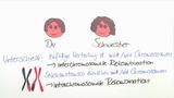 Rekombination der Chromosomen – Entstehung vielfältiger Individuen