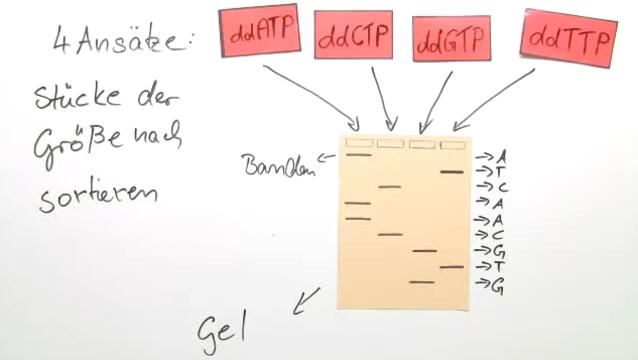 DNA-Sequenzierung – In 5 Minuten erklärt.