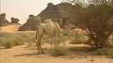 Sahara - Paradoxon des Klimawandels