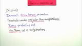 Ablativus loci und separativus – Ablativ des Ortes und der Trennung