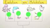 Verwandtschaft der Arten – Evolution von Molekülen