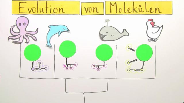 Verwandtschaft der Arten – Evolution von Molekülen – Biologie online ...