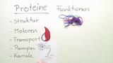 Proteine – Typen, Eigenschaften und Struktur