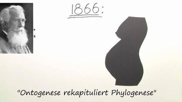 Die biogenetische Grundregel