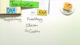 Proteinbiosynthese – von der DNA zum Protein