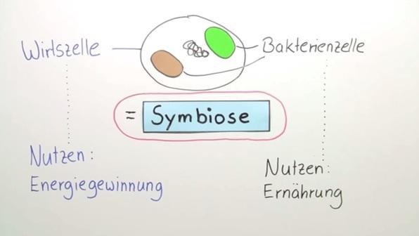 Endosymbiontentheorie – Entstehung der Chloroplasten und Mitochondrien