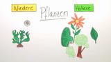 Grundaufbau der Pflanzen (Vertiefungswissen)
