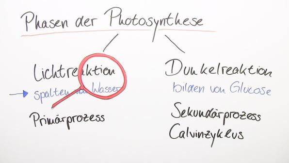 Photosynthese lichtreaktion teil 1