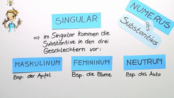 Der Numerus des Substantivs