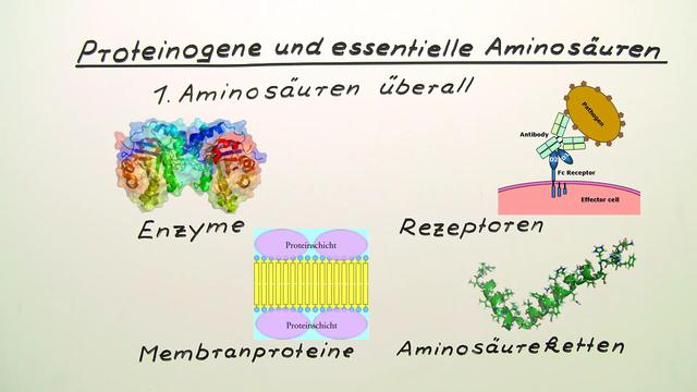 Proteinogene und essentielle Aminosäuren