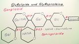 Glykolipide und Glykoproteine