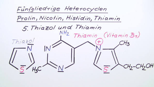 Fünfgliedrige Heterocyclen – Prolin, Nicotin, Histidin, Thiamin