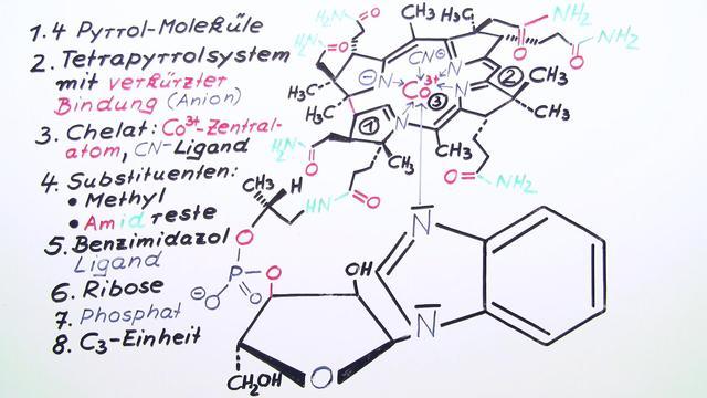 Fünfgliedrige Heterocyclen – Vitamin B12