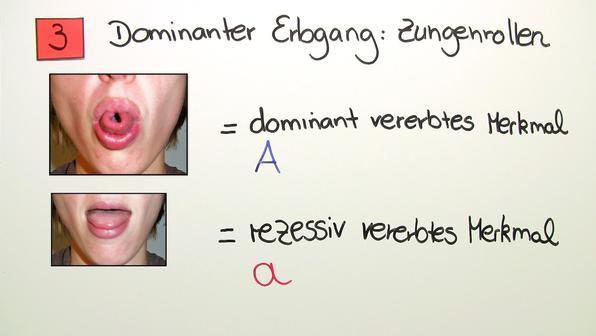 Stammbaumanalyse – Zungenrollen und Albinismus