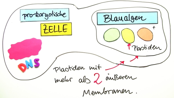 Endosymbiontentheorie