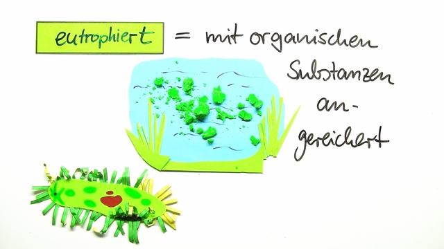 Einzeller – das Pantoffeltierchen – Biologie online lernen