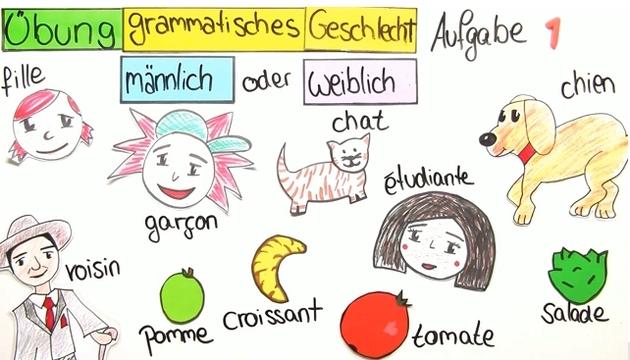 Substantive – grammatisches Geschlecht (Übungsvideo)