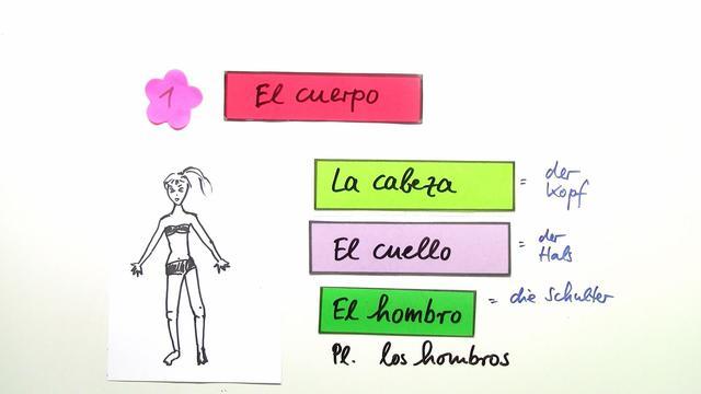 Körperteile – Spanisch online lernen