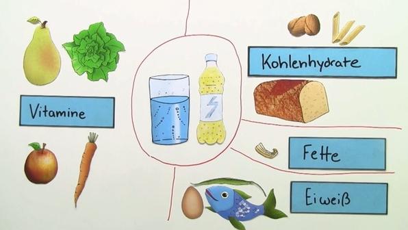 Wozu braucht der Mensch Nährstoffe?