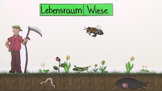 Tiere und Pflanzen auf der Wiese