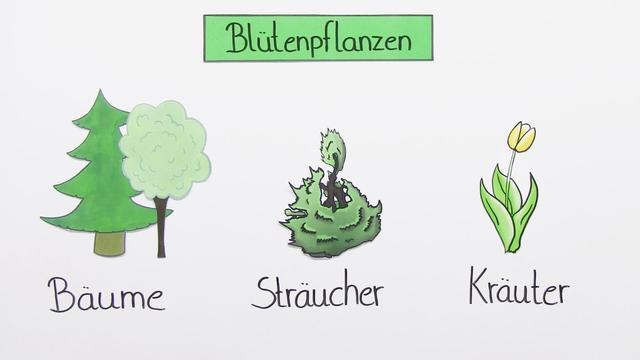 Blütenpflanzen – In 5 1/2 Minuten erklärt.