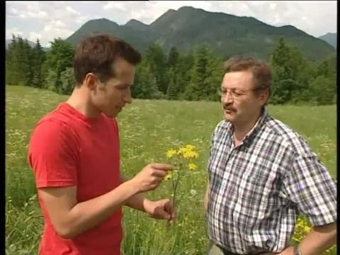 Willi und die Honigbienen
