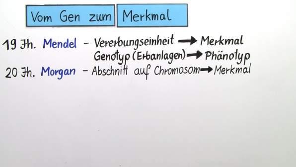 Genwirkkette – vom Gen zum Merkmal