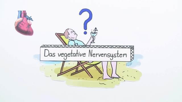 Das vegetative Nervensystem