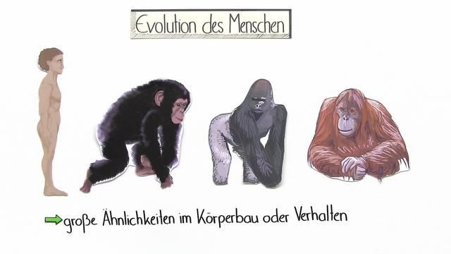 Evolution des Menschen (Basiswissen)
