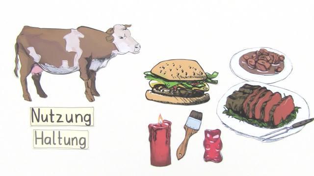 Rinder - wichtige Nutztiere – In 4 1/2 Minuten erklärt.