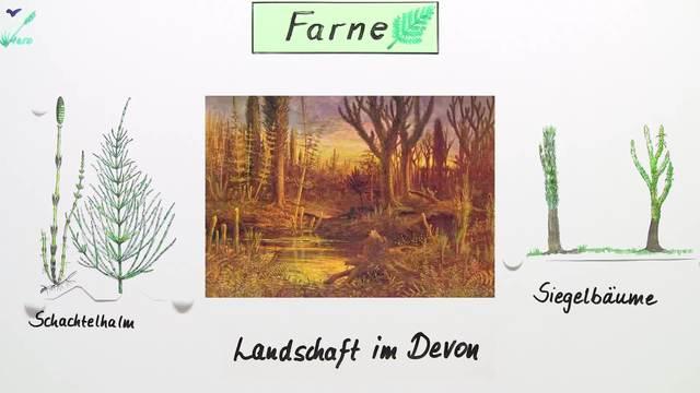 Farne – Bau und Fortpflanzung