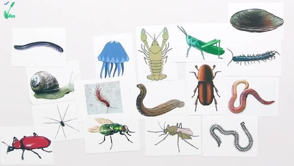 Bestimmen von Lebewesen – heimische Bäume und wirbellose Tiere