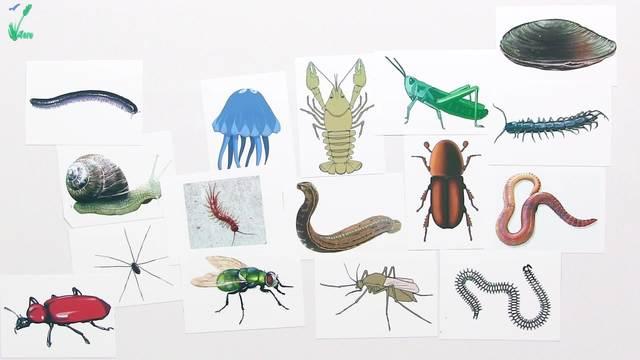bestimmen von lebewesen heimische b ume und wirbellose tiere biologie online lernen. Black Bedroom Furniture Sets. Home Design Ideas