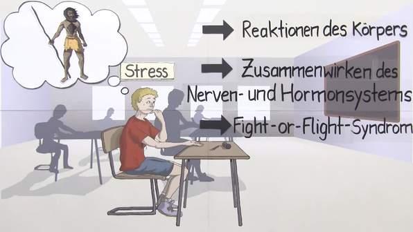 Was passiert bei Stress? - Fight-or-Flight-Syndrom: Ein Zusammenwirken von Nerven- und Hormonsystem
