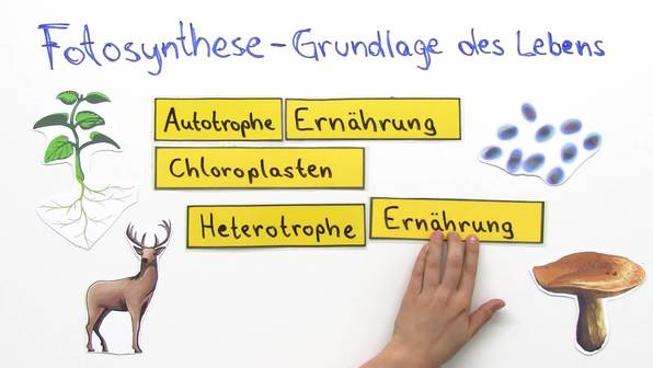 Autotrophe und heterotrophe Ernährung - Fotosynthese als Grundlage des Lebens